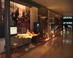 human evolution display